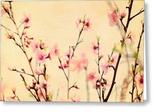 Enlightenment Photographs Greeting Cards - Cherry Blossoms Greeting Card by Kim Fearheiley