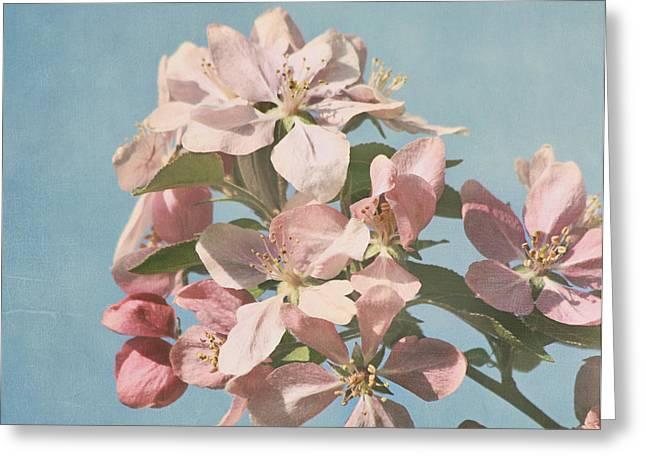 Cherry Blossoms Greeting Card by Kim Hojnacki