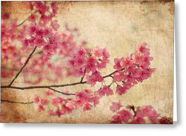 Grunge Greeting Cards - Cherry Blossoms Greeting Card by Rich Leighton