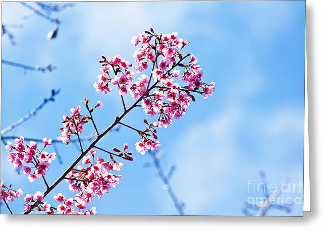 Pink Flower Branch Pyrography Greeting Cards - Cherry blossoms sakura Greeting Card by Chaloemphan Prasomphet