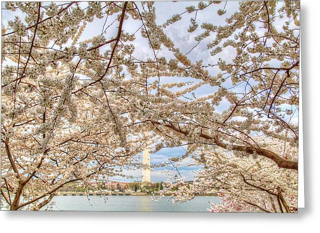 President Greeting Cards - Cherry Blossoms Washington DC 3 Greeting Card by Metro DC Photography