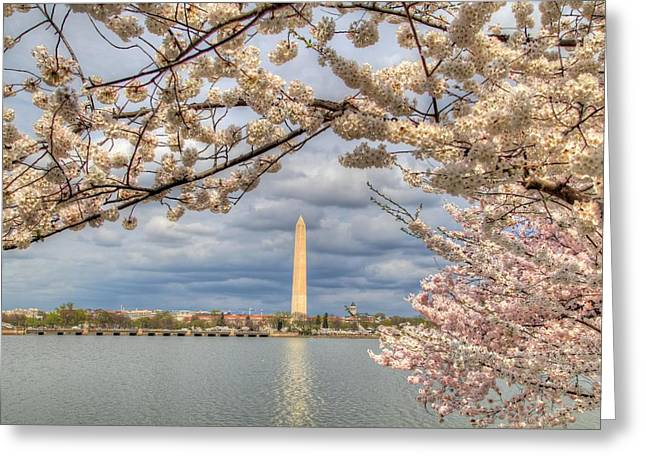 Dc Greeting Cards - Cherry Blossoms Washington DC 4 Greeting Card by Metro DC Photography