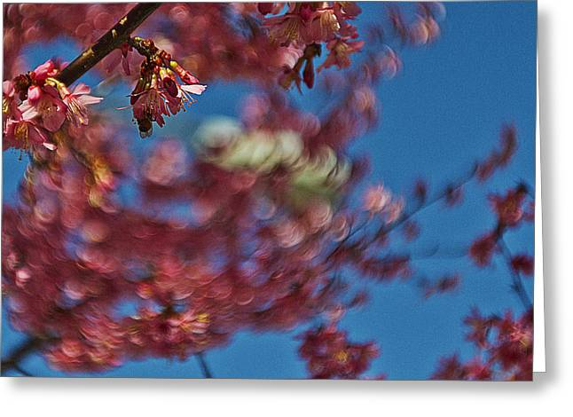 Moving Petals Greeting Cards - Cherry Breeze Greeting Card by Alex AG