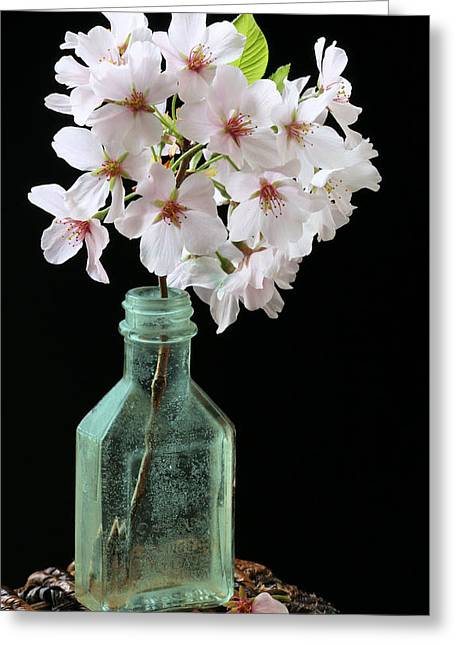 Cherry Blossom Festival Greeting Cards - Cherry Green Greeting Card by JC Findley