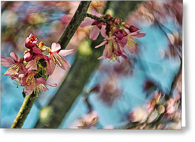 Moving Petals Greeting Cards - Cherry Petals Greeting Card by Alex AG