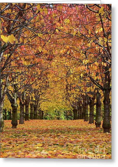 Colourfully Greeting Cards - Cherry Tree Plantation Greeting Card by Bruno Santoro