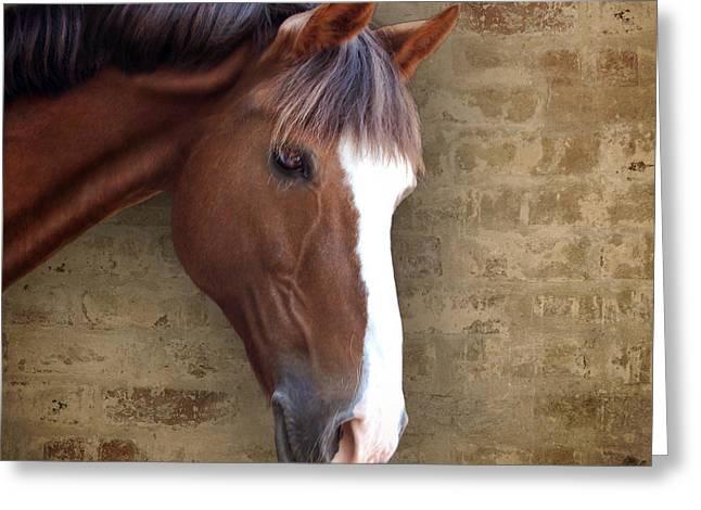 Chestnut Pony Portrait Greeting Card by Ethiriel  Photography