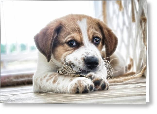 Puppy Dog Eyes Greeting Cards - Chewing the News Greeting Card by Tilly Williams