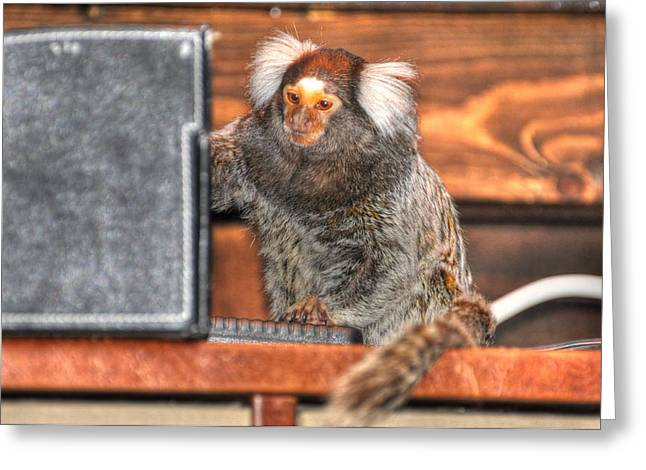 Chewy The Marmoset Greeting Card by Barry R Jones Jr