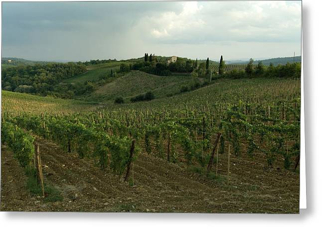 Chianti Hills Greeting Cards - Chianti Vineyards In Tuscany Greeting Card by Todd Gipstein