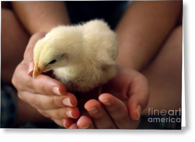 Animals Love Greeting Cards - Chick In Hands Greeting Card by Natasha Said