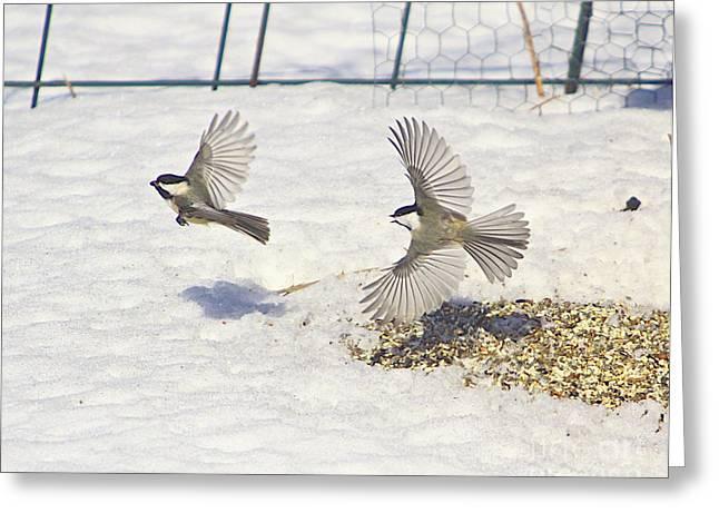 Snow Tree Prints Greeting Cards - Chickadee-6 Greeting Card by Robert Pearson