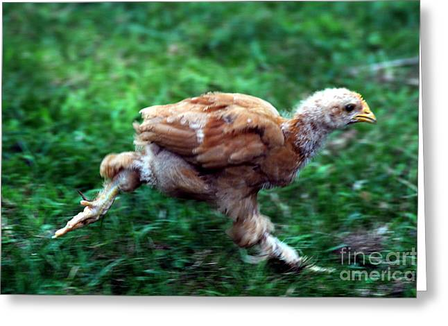 Nature Phots Greeting Cards - Chicken Little Greeting Card by Cindy Roesinger