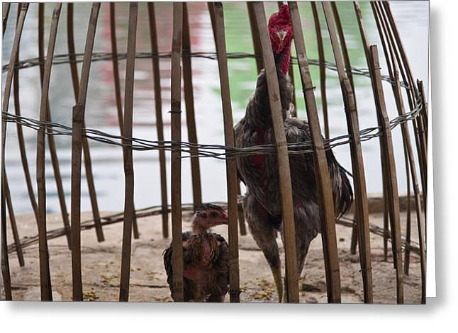 Chickens in Bamboo Cage Greeting Card by David Buffington