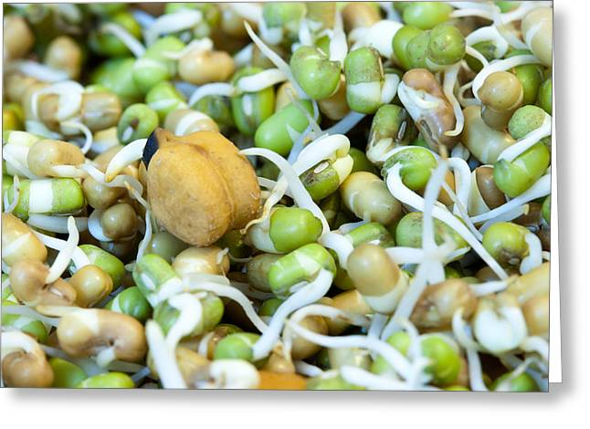 Chickpea and other lentils in the form of healthy eatable sprouts Greeting Card by Ashish Agarwal
