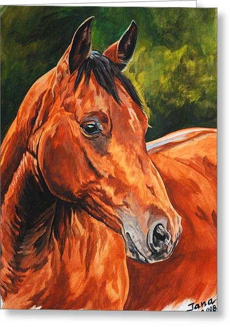 Quarter Horses Greeting Cards - Chico Greeting Card by Jana Goode