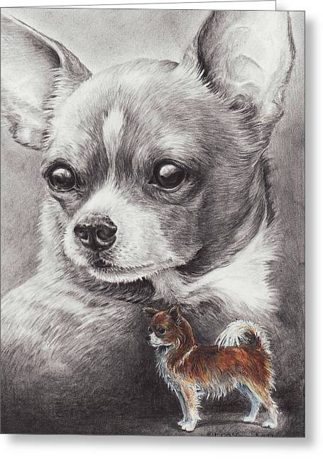 Chi Drawings Greeting Cards - Chihuahua Greeting Card by Laurie McGinley