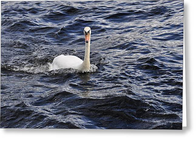 Swans... Greeting Cards - Child of Lir Greeting Card by Donna and Lars Tovander