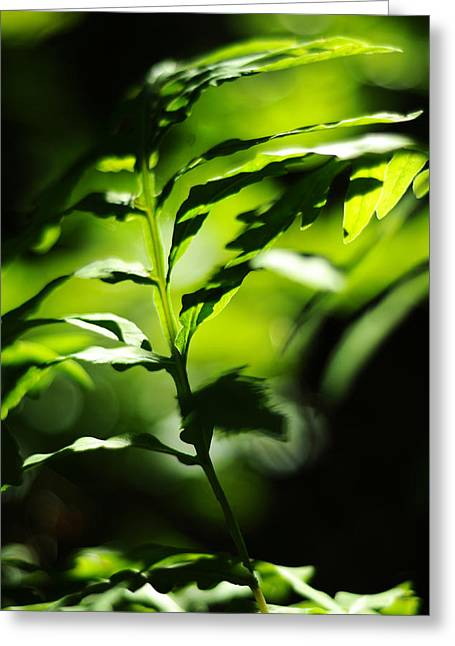 Dappled Light Greeting Cards - Child of the Wind Greeting Card by Rebecca Sherman