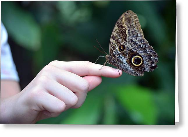 Innocence Greeting Cards - Child With Owl Butterfly Greeting Card by Sandi OReilly