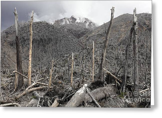 Bare Trees Greeting Cards - Chile. Forest Destroyed By Pyroclastic Greeting Card by Richard Roscoe