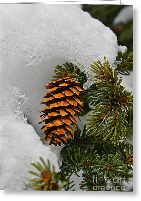 Pine Cones Greeting Cards - Chilled Greeting Card by Rick  Monyahan