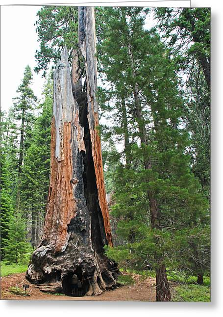 Sequoia National Park Greeting Cards - Chimney Tree Greeting Card by Heidi Smith