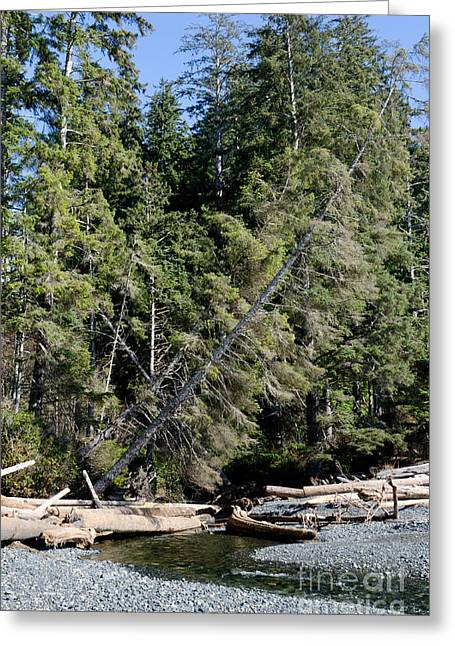 China Beach Greeting Cards - CHINA CREEK china beach juan de fuca provincial park BC canada Greeting Card by Andy Smy