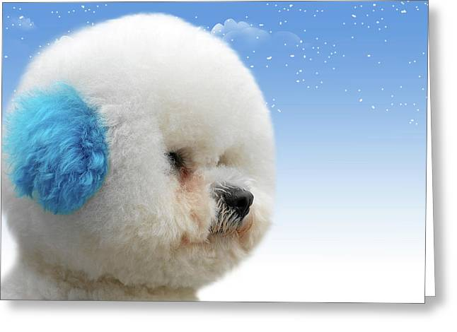 Dog Breeds Greeting Cards - Chinas latest craze - Dyeing pets Greeting Card by Christine Till
