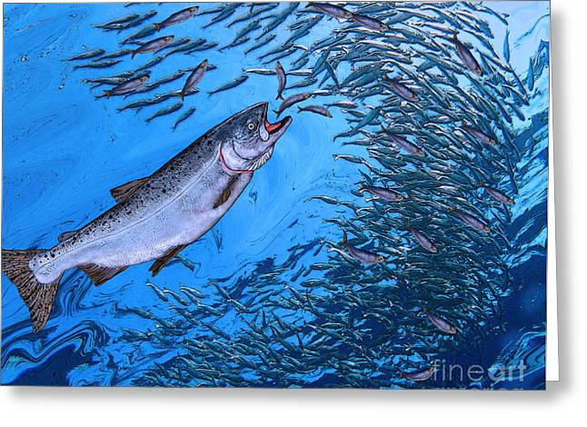 Fly Fishing Print Greeting Cards - Chinook Salmon Greeting Card by Ralph Martens