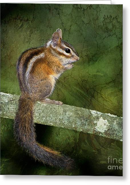 Green Day Greeting Cards - Chipmunk in the Forest Greeting Card by Betty LaRue