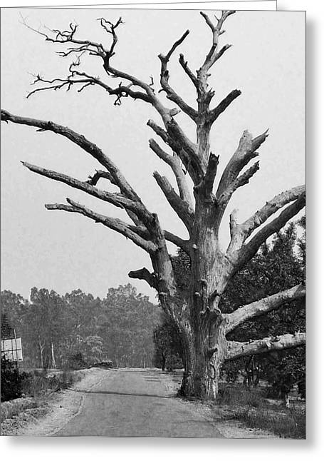 Village Greeting Cards - Chiseled Tree In Highway Greeting Card by Sumit Mehndiratta
