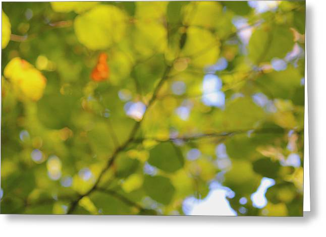 Impressionist Photography Greeting Cards - Chlorophyll Daydream Greeting Card by Andrew Pacheco
