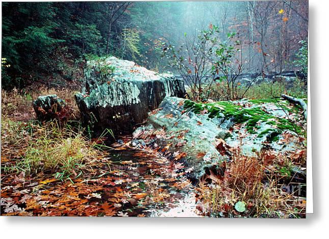 Stafford Greeting Cards - Chopawamsic Creek Misty Autumn Day Greeting Card by Thomas R Fletcher