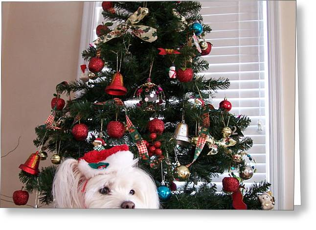 Christmas Card Dog Greeting Card by Vijay Sharon Govender