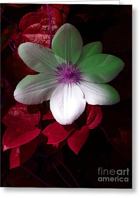 Christmas Cheer Greeting Card by Joyce Hutchinson