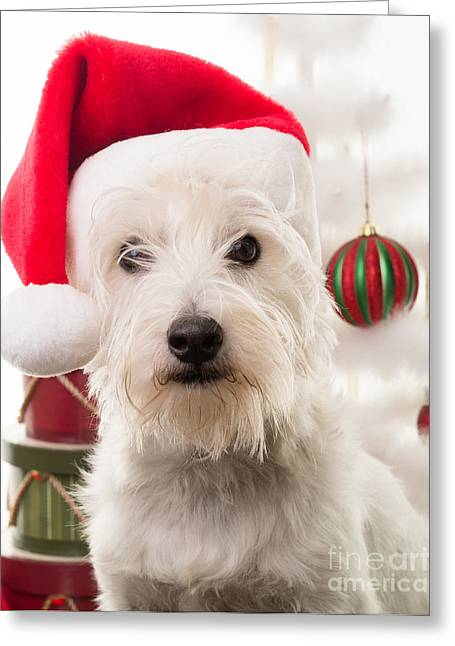 Puppies Photographs Greeting Cards - Christmas Elf Dog Greeting Card by Edward Fielding