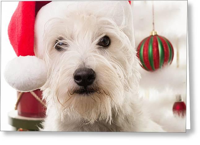 Christmas Elf Dog Greeting Card by Edward Fielding