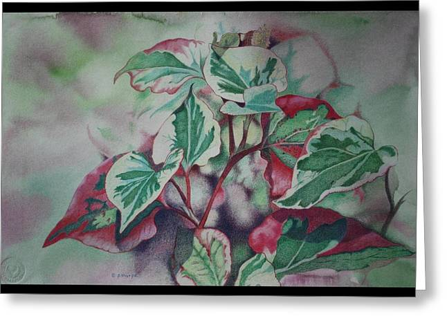 Close Focus Nature Scene Greeting Cards - Christmas in July Greeting Card by Patsy Sharpe