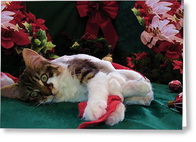 Kitteh Greeting Cards - Christmas Joy w Kitty Cat - Kitten w Large Eyes Daydreaming about Xmas Gifts - Framed w Poinsettias Greeting Card by Chantal PhotoPix