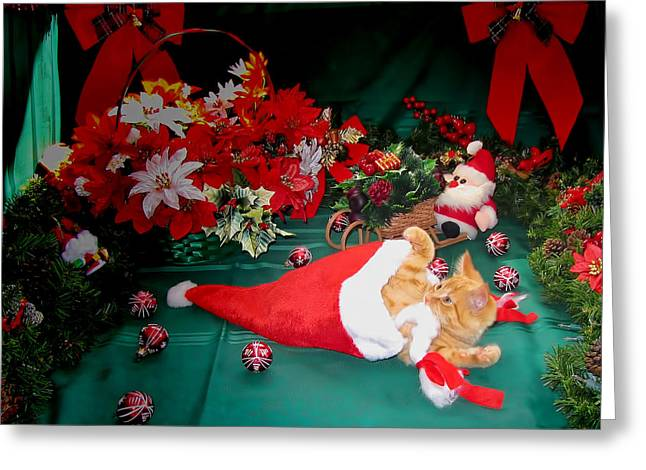 Kitteh Greeting Cards - Christmas Kittens - Kitty Cat Chewing on Santas Hat - Red Xmas Bows and Poinsettia Flower Basket Greeting Card by Chantal PhotoPix
