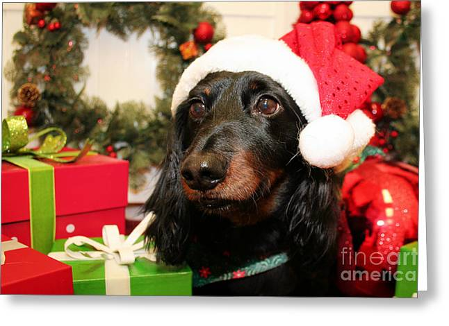 Xmas Greeting Cards - Christmas Portraits - Dachshund Greeting Card by Renae Laughner