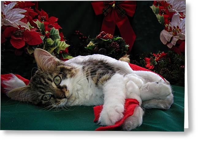 Kitteh Greeting Cards - Christmas Scene w Kitten - Sleepy Kitty Cat w Paws Stretched Out Waiting for Santa Claus on Xmas Eve Greeting Card by Chantal PhotoPix