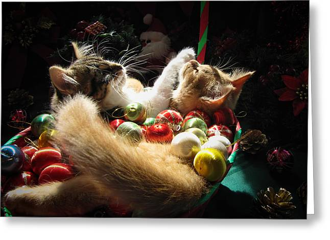 Kitteh Greeting Cards - Christmas Season w Two Kittens in Love - Kitty Cat Angels w Heads Up Nestled in a Basket of Baubles Greeting Card by Chantal PhotoPix