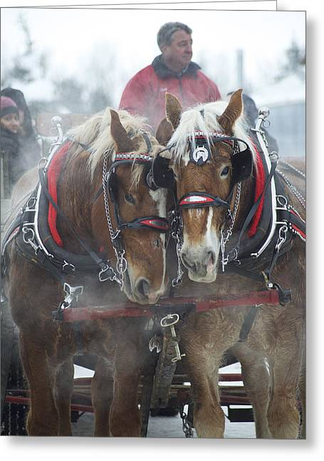 Drysdale Greeting Cards - Christmas Sleigh Ride Greeting Card by Elaine Mikkelstrup