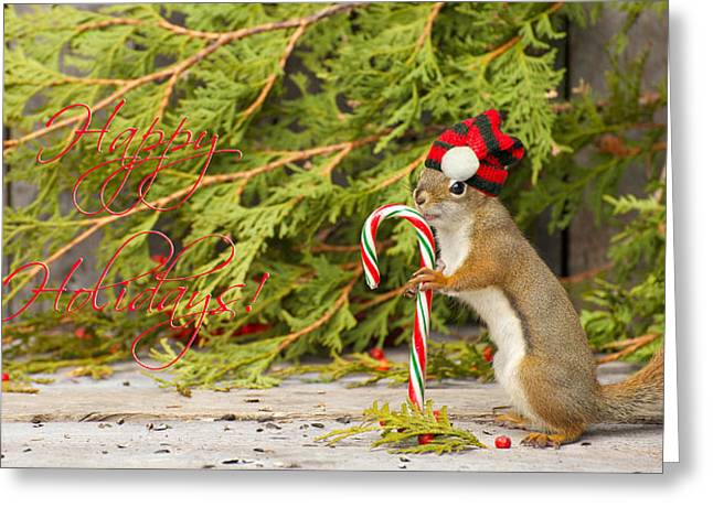 Christmas Squirrel. Greeting Card by Kelly Nelson
