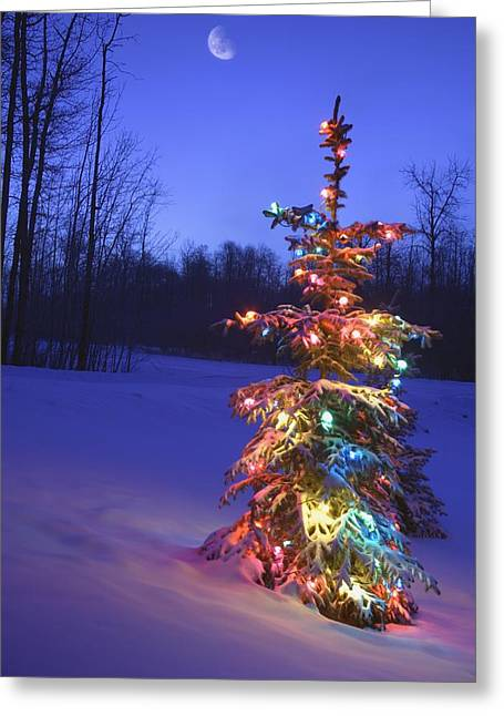 Christmas Tree Outdoors Under Moonlight Greeting Card by Carson Ganci