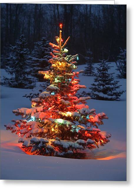 Christmas Tree With Lights Outdoors In Greeting Card by Carson Ganci