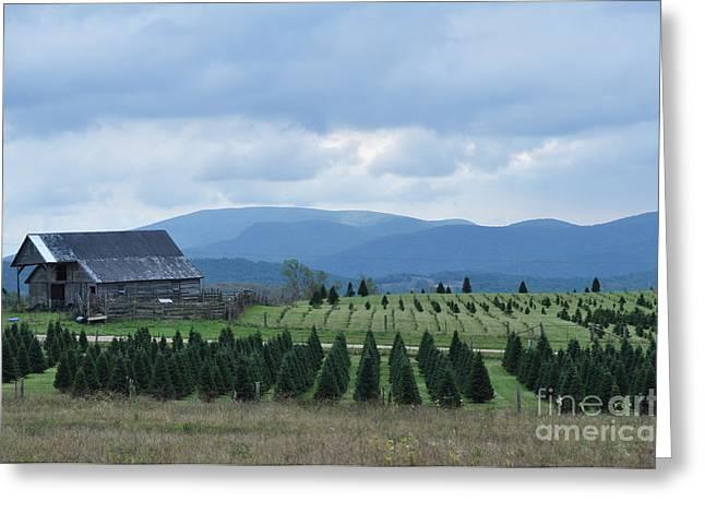 Lenora Berch Greeting Cards - Christmas Trees Greeting Card by Lenora Berch