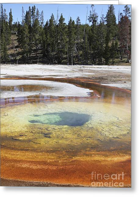 Chromatic Pool Hot Spring, Upper Geyser Greeting Card by Richard Roscoe